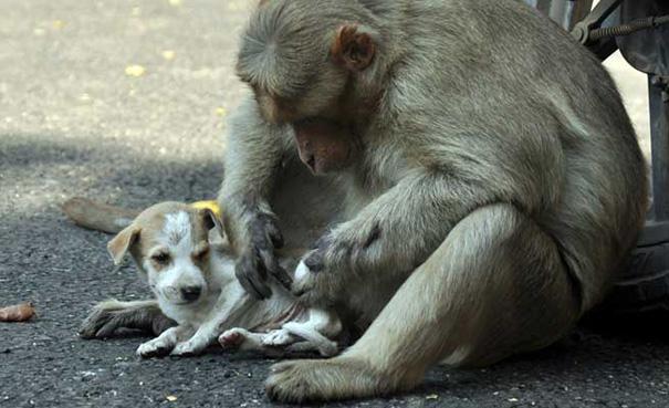 monkey care puppy