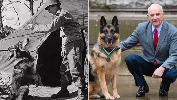 US Army Dog